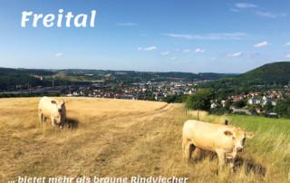 Postkarte Freital - Braune Rindviecher