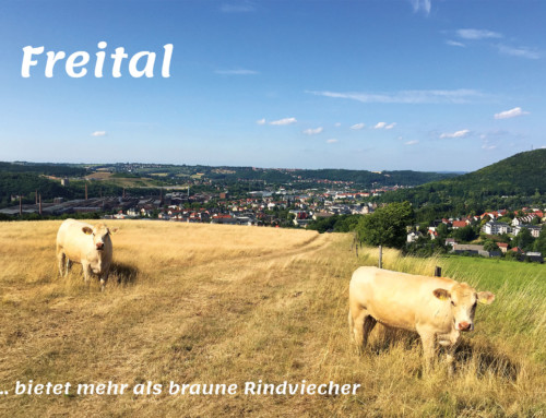 """Postkarte 3 """"Freital bietet mehr als braune Rindviecher"""""""